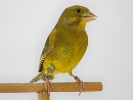 Pastello giallo dominante