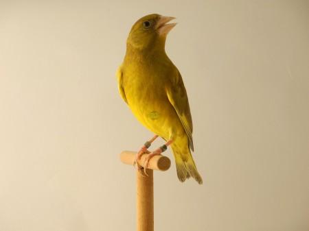 Bruno giallo dominante